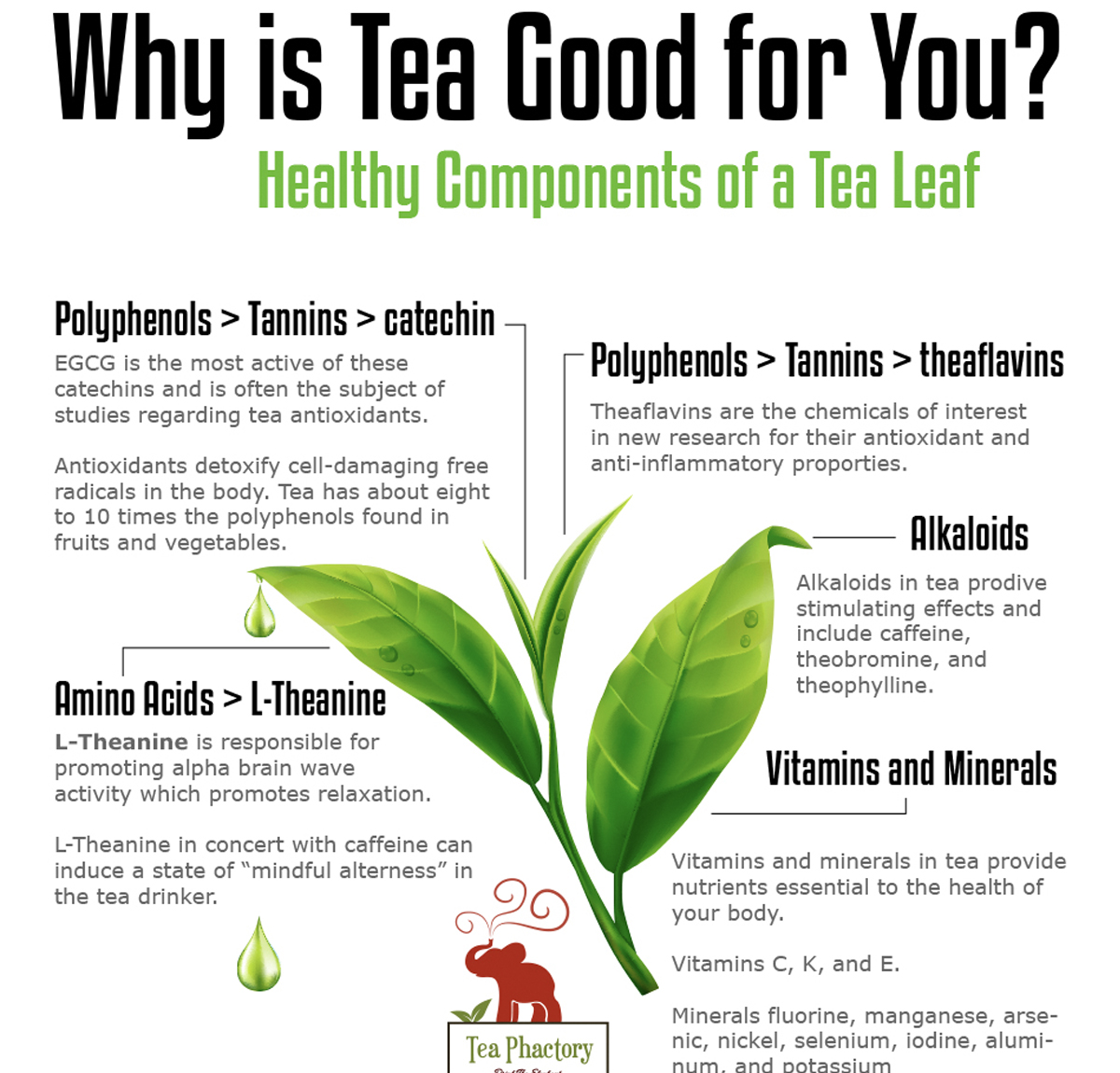 Why is tea good for you? Digital Infographic and Print Poster
